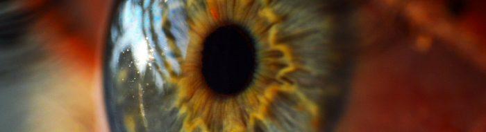 Auge. Foto: skeeze. Lizenz: CC0