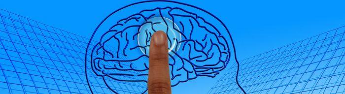 Gehirn. Bild: Gerd Altmann. Lizenz: CC0